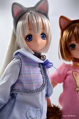 Pure Neemo Meow x Meow Alisa and Maya (Nyx ☆) Tags: pure neemo meow alisa maya azone