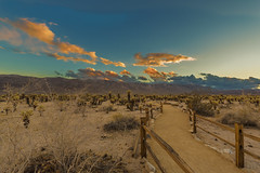 750_5498 (lgflickr1) Tags: desert outdoors sunset sand cactus fence path mountains joshuatree dusk scenic dry nature d750 nikon goldenlandscape