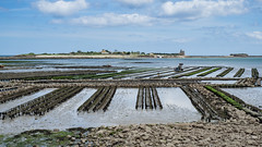 Eating a raw oyster is like French kissing a mermaid (Peter Jaspers (on/off)) Tags: frompeterj© 2017 olympus zuiko omd em10 1240mm28 france french normandie normandy cotentin manche saintvaastlahougue vauban tahitou island oyster oysterbank huitressaintvaast unesco worldheritage 169 widescreen