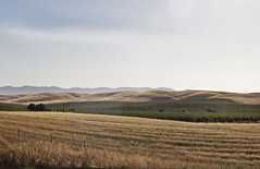 Feel the Warmth Beside Me (skipmoore) Tags: california yolocounty rolling hills driveby
