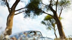 PMC Week 41 | #2 | FH3 (Mr. Pebb) Tags: stockshot photomode stock classic forzaseries forzahorizon3 forza horizon3 videogame turn10 t10 playgroundgames jaguar etype sportscar car british tree trees rear rwd rearwheeldrive frontengined
