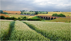 Barley Fields (Welsh Gold) Tags: east midlands meridian unit 1m61 st pancras melton mowbray service harringworth seaton