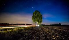 Lightspeed (andreasmally) Tags: night tree stars nacht baum sterne
