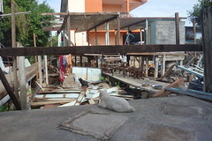 what the hell happened to our house? (the foreign photographer - ฝรั่งถ่) Tags: dscjul262015sony two cats demolished house khlong lat phrao bangkhen bangkok thailand sony rx100