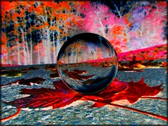 2017-07-21 Fall ball (april-mo) Tags: ball fall autumn red deadleaf crystalball crystalballphotography digitalart forest
