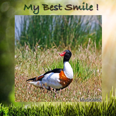 ⚜ My best smile ! Mon plus beau sourire ! ⚜ #2 (sylvieauclair) Tags: sourire smile ducks canards