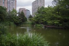 Kariya Park (I Am Steele) Tags: kariya park mississauga pond water summer landscape beauty natural nature