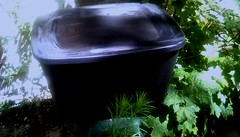 Storage bin! (Maenette1) Tags: storage bin black miscitems plants summer backyard menominee uppermichigan flicker365