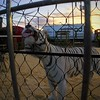Tiger (christopherhall990) Tags: whitetiger white sunset photographer photo photography nature tiger