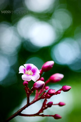 B O K E H (NabenduBhatt Photography) Tags: bokeh nature tripura colour