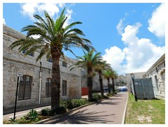 PALM TREES AND BLUE SKIES REIGN (Visual Images1) Tags: trees palmtrees bermuda picmonkey