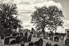 Stones and Trees (PAJ880) Tags: phipps st burual ground revolutionary boston ma charlestown bw mono graveyard 18th 17th century