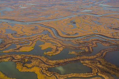 Natural Patterns (Tim Melling) Tags: copper river delta natural patterns alaska timmelling aerial photography