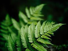 (t*tomorrow) Tags: panasonic lumix gx8 nokton nokton25mmf095 植物