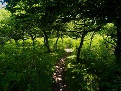 P7020629 (simonrwilkinson) Tags: devon path lustleigh trees lustleighcleave landscape