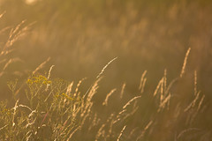A summers eve (ArtGordon1) Tags: grass summer sunset evening july 2017 walthamstow london england uk davegordon davidgordon daveartgordon davidagordon daveagordon artgordon1