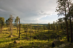 Post-Rain Lighting Rules (Tiara Rae Photography) Tags: wyoming trees devils tower national monument nature forest boulders rain storms golden hour light shadows