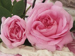 Queen of Denmark (Poppins' Garden) Tags: thequeenofdenmark pink rose stilllife pearl