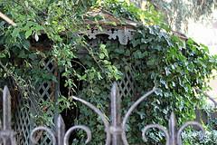 hidden pergola (overthemoon) Tags: switzerland suisse schweiz svizzera romandie vaud lausanne boulevarddegrancy wroughtiron fence garden greenery pergola overgrown ivy creeper