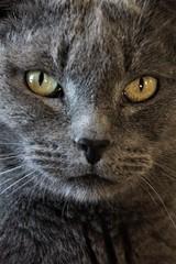 Portrait of a Cat.. (catherine4077) Tags: cat portrait sanctuary pigsanimalsanctuary shepherdstown westvirginia animal
