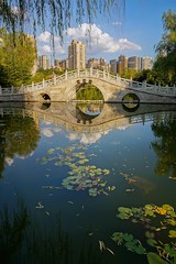 Afternoon in a Chinese park (Asif Hasnat Monon) Tags: park lake landscape cityscape cityarchitecture china shaanxi xian tradition traditionalchina traditional lotus bridge bridgeonlake sonya57 sonyslta57 sonydt1650f28ssm sonyimages sonyalpha