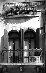 Venedig 4 (frucht-drops) Tags: fenster lichtundschatten schwarzweis schwarzundweiss window blumen flowers architektur canon eosm5 greyscale venedig venice italien italy architecture schatten shadows