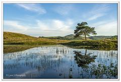 ABC_3780 (Lynne J Photography) Tags: cumbria lakedistricy kellyhalltarn sunrise nikon tarn reflection sunset lonetree lone tree waterfalls longexposure tomgillfalls