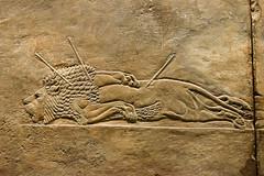Felled Male Lion From Nineveh (meg21210) Tags: nineveh assyrian male lion death bm britishmuseum london england uk greatbritain assyria animal arrows ancient ashurbanipal 64535bc palace northpalace hunt kill museum stone art