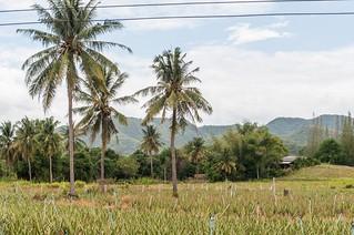 hua hin - thailande 29