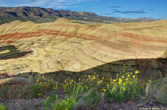 Wildflowers and Painted Hills (walkerross42) Tags: wildflowers paintedhills johnday fossilbeds oregon hills stripes mountains overlook pentaxart shadow contour