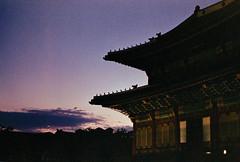 .sunsets. (Camila Guerreiro) Tags: film expiredfilm fuji pentaxmesuper seoul camilaguerreiro southkorea analog expired natura1600 grain palace changdeokgung