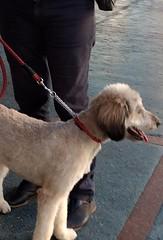 me solta! (luyunes) Tags: cachorro cão bicho omelhoramigodohomem motoz luciayunes