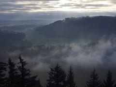 (xelladrillox) Tags: olympus omd em1 kit lens 1240mm f28 fall autumn blackforest sunrise fog foggy trees mist misty mood moody