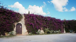 Serranova castle wall