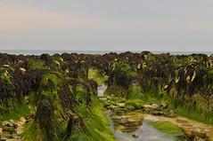 Seaweed (G Reeves) Tags: nikon nikond300 garyreeves seafront beach sea waves water rottingdean eastsussex brighton seaweed green abstract texture