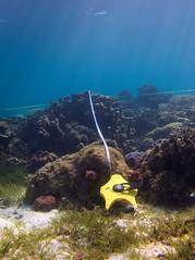 Tape (PacificKlaus) Tags: malapascua visayas cebu philippines underwater ocean nature scuba diving peopleandthesea transsect
