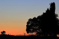 winter daybreak (alden0249) Tags: australianlandscape dawn light landscape nature sunrise silhouette winter