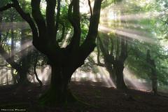 Dream of freedom (Hector Prada) Tags: bosque niebla bruma sol luz verano magia naturaleza forest fog sun light summer magic mist árbol tree nature paisvasco basquecountry