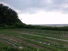 View  #5 from Gono Line in Aomori (Fuyuhiko) Tags: 青森 青森県 五能線 ローカル線 aomori pref prefecure prefecture
