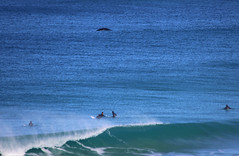 whale and the surfers logans beach_3768 (gervo1865_2 - LJ Gervasoni) Tags: logans beach warrnambool ocean sea surf waves water whale nursery victoria australia 2017 photographerljgervasoni southern right logging
