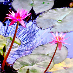 ( We can never have enough of nature ) (Dom Guillochon) Tags: outdoor pond water aquatic plants nature flowers waterlilies earth digitalpainting roam wandering wild life time reality dreams existence humans being nothingness impression expression multiverse