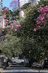 Época de ipês (Johnny Photofucker) Tags: ipê ipêrosa ipês árvore árvores tree trees albero alberi rua street via sãopedro bh belohorizonte patadevaca lightroom 70200mm brasil brazil brasile minasgerais