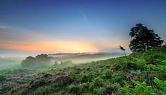 Into The Mist (nicklucas2) Tags: newforest rockfordcommon tree mist dawn heather bracken contrail