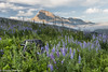 St Mary Meadow (greggohanian) Tags: glaciernationalpark stmarylake monatana meadow lupines wildflowers mtdivide nikond800 nikon2470 nikon