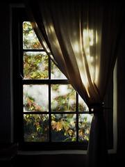 wine estate (murielplaster) Tags: franshoek wine travel roadtrip window morning light photography