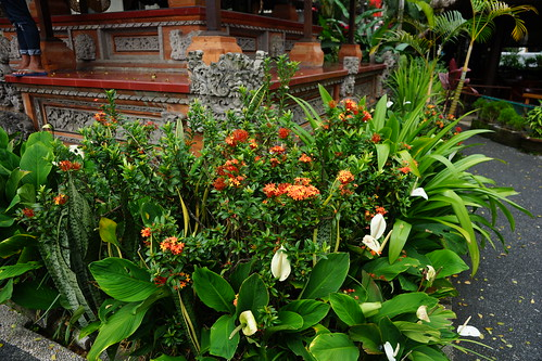 Flowers at the Ubud Water Palace