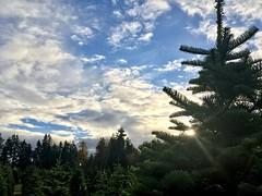 Iconic Northwest (artofjonacuna) Tags: washington state evergreen christmas tree clouds sky