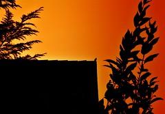 Zoziau du soir... espoir (frenziM´s little world) Tags: shadow bicolore artistic bird evening romantic blackbird merle amsel canong7xmarkii