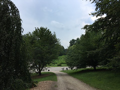 Beech Path looking towards Bussey Brook (Plant Image Library) Tags: arnold arboretum trees plants new england boston ecology science botany july 2017 beech path looking towards bussey brook