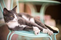 Lamparita (feliperodriguez) Tags: kitten kitty cat pussycat animal pet leicanoctilux leica leicanoctiluxf1 noctilux